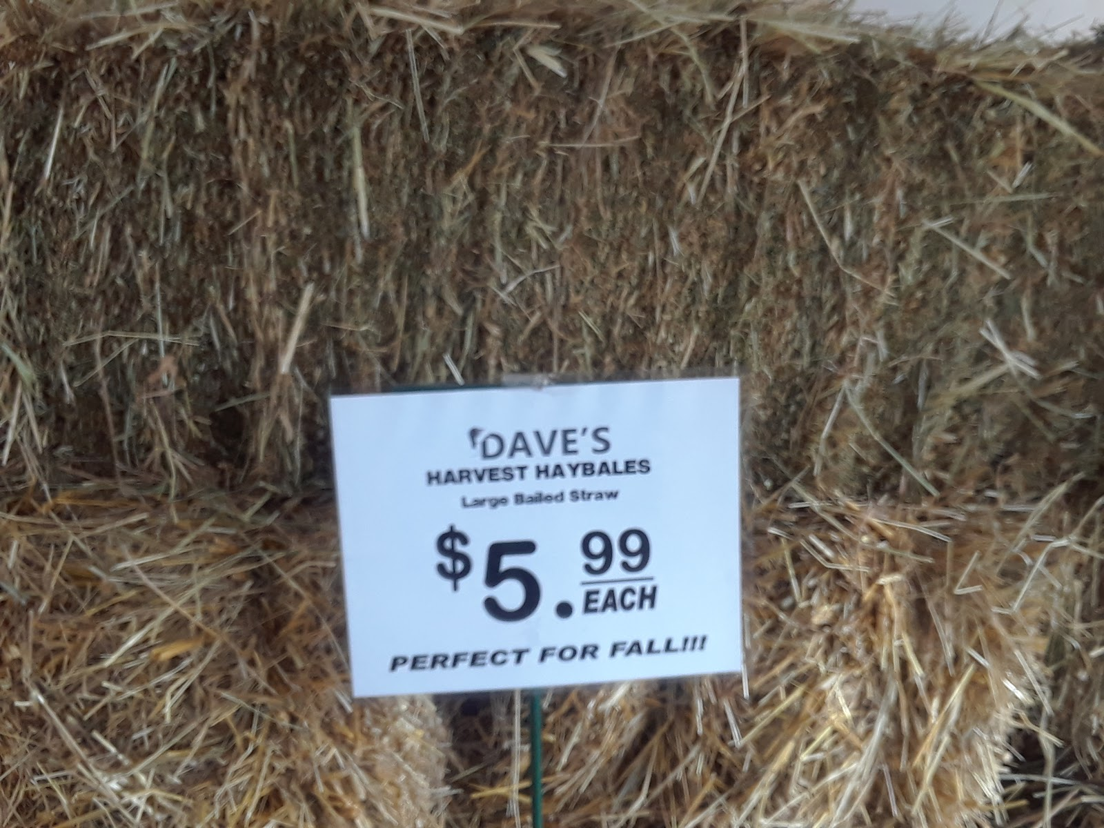 Harvest Hay Bales At Dave's