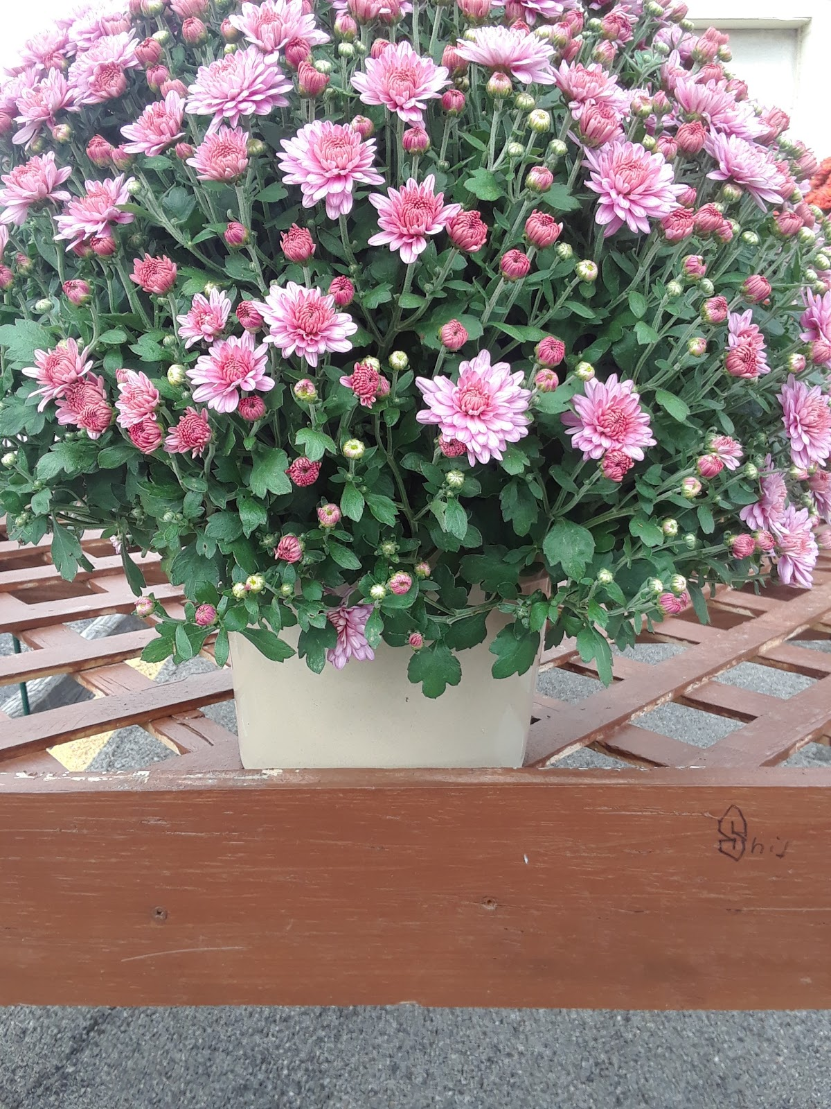 Pink Flowers Outside on Brown Table